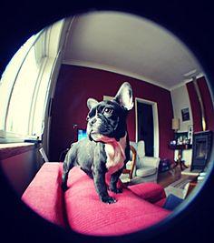 Raquel loves Mel! My sweet french bulldog.