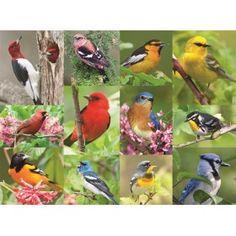 #AlzheimersAndDementia 36Pcs #Puzzle - Birds-Feather Shop Now http://www.pharmathera.com/puzzles-for-gift-alzheimers-and-dementia-puzzles