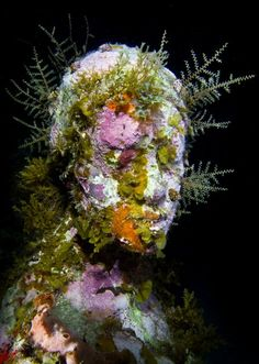 Overview - Underwater Sculpture by Jason deCaires Taylor, overgrown with corals
