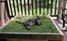 What it took to give our cat a happy life - SunGazette.com | News, Sports, Jobs, Community Information - Williamsport-Sun Gazette Hiding Cat Litter Box, Side Garden, What It Takes, Dream Garden, Happy Life, Lawn, Kitty, Animals, Balcony