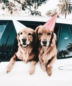 The Versatile Golden Retriever - Champion Dogs Animals And Pets, Baby Animals, Funny Animals, Cute Animals, Cute Dogs And Puppies, I Love Dogs, Doggies, Cutest Dogs, Wallpaper Fofos