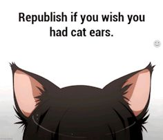 This is a book with lots of cats WARNING: there is a chance you might… #umor # Umor # amreading # books # wattpad