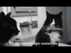Sad French Kitty Video Wins 'Best Cat Video on the Internet' WATCH THIS VIDEO ITS HILARIOUS