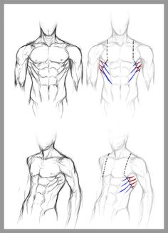 DeviantARTist jinx-star's guide to drawing the serratus anterior muscles.