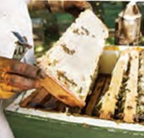 Business can 'bee buzzing' with the Beekeeping Start-Up Kit! This gift has everything 3 Ghanaian women need to generate income from beekeeping to help increase household income during lean times Holiday Gift Guide, Holiday Gifts, Canadian Christmas, Gifts For Your Mom, Home Made Soap, Start Up Business, Meaningful Gifts, Bee Keeping, Giving