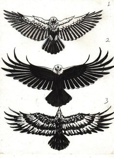 Read Complete 63+ Latest Raven Tattoos Ideas