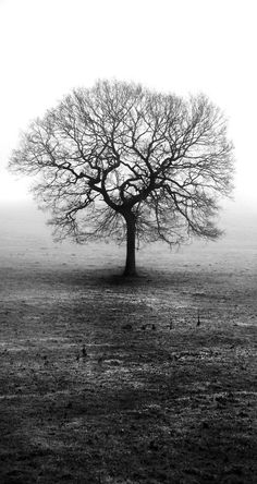 I love trees like this.., there is a tree like this not 30 miles away from my home. It is my favourite tree. Stands alone, stands with great pride and survives all storms.