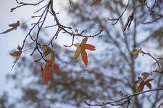 "ITAP of Houston's ""fall"" foliage http://ift.tt/2itBQeL"