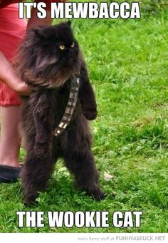 Mewbacca @Christina Childress Childress Childress Browning Lets do this to dave at work. The black one in intake. :)