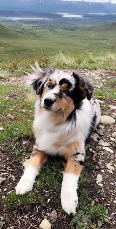 6 Best Loyal, Hardworking Farm Dog Breeds 6 Best Loyal, Hardworking Farm Dog Breeds There are some dogs who were just born to be in the outdoors and run free. The post 6 Best Loyal, Hardworking Farm Dog Breeds appeared first on Welcome! Aussie Dogs, Australian Shepherd Dogs, Minature Australian Shepard, Aussie Shepherd, Mini Aussie, Cute Baby Dogs, Cute Dogs And Puppies, Doggies, Cutest Dogs