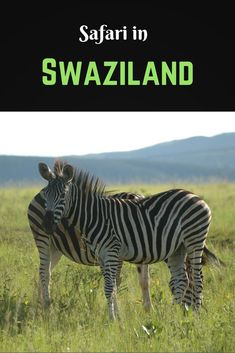 Swaziland may be the smallest country in the southern hemisphere, but it's big on experiences. Read about how to make the most of your Swaziland trip.