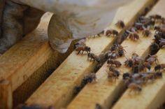 bee bee.