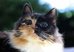 Tato adoptovaná kočička je sice slepá, ale za to má ty nejkrásnější oči - Evropa 2