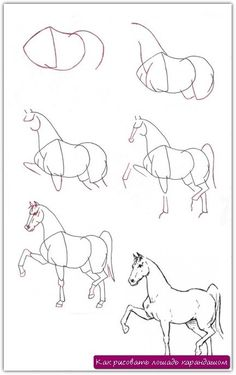 Как рисовать лошадь карандашом. Урок №5