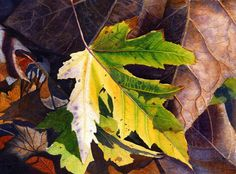 Watercolor print autumn leaf from an original painting $20