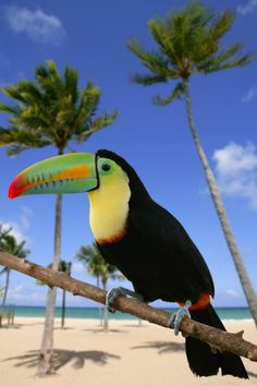 Toucan - ©holbox / Shutterstock  I love this bird!