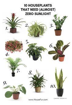 10 Houseplants That Need (Almost) Zero Sunlight | House Fur