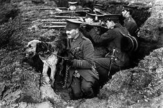 The 9 million unsung heroes of WW1: Dogs, horses and carrier pigeons made victory possible - Mirror Online