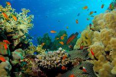 La mer Rouge est une des destinations les plus prisées pour venir s'adonner aux joies de la plongée sous-marine. Les nombreuses stations balnéaires égyptiennes proposent des spots de rêve comme Safaga, Quseir et Marsa-Alam. Outre les dauphins, requins et tortues, vous pourrez admirer de nombreuses épaves de navires.