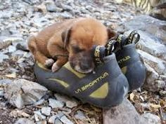 We know where he'll spend most of his dog days! So cute!