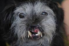 Ugly animals of the internet Ugly Animals, Cute Animals, Unique Animals, World Ugliest Dog, Tuna Dog, Ugliest Dog Contest, Teach Dog Tricks, Ugly Dogs, Weird Dogs