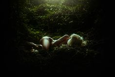 """Innocence - <a href=""""http://www.tjdrysdale.com/finearttutorial"""">Learn how to edit pictures like this one in my new tutorial!</a>      <a href=""""http://tjdrysdale.com/"""">Website</a> 