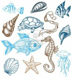 Illustration Of Fish Sea Black And White Set Royalty Free Cliparts, Vectors, And Stock Illustration. Image 15063103.