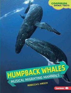 Humpback Whales: Musical Migrating Mammals
