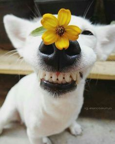 Doggy with folwer Cute Funny Animals, Cute Baby Animals, Funny Dogs, Animals And Pets, Cute Animal Pictures, Funny Animal Pictures, Cute Puppies, Cute Dogs, Dog Tumblr