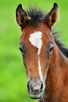 ☀Portrait of a cute foal by Tambako the Jaguar, via Flickr*