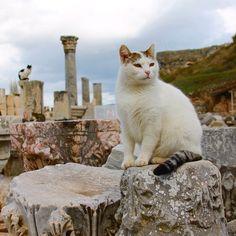 One of my favorite photos of the cats of #Ephesus! #PaulaInTurkey #WalksInIstanbul #GoTurkey #travel #Turkey #instatravel #travelstoke #travelgram #traveldeeper #catsofinstagram #cats by paulabendfeldt