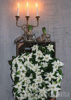 Valkoiset pikkujoulutähdet puulaatikossa seinällä. Kynttilänjalka viimeistelee tunnelman.