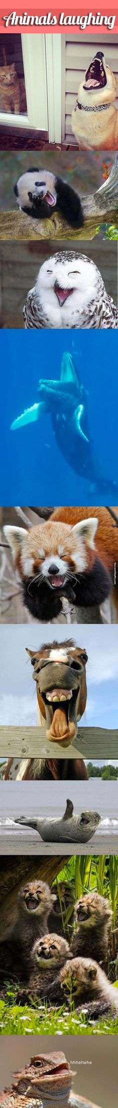 Animals Laughing funny cute animals quote adorable animal lol humor funny pictures funny animals funny pics