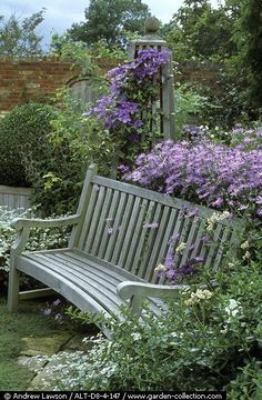 Wooden bench with Asters