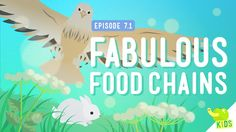 "Fabulous Food Chains: Crash Course Kids by thecrashcourse: ""Everyone eats, right? But how does that food get the energy to power you? In this episode of Crash Course Kids, Sabrina talks about the. Third Grade Science, Elementary Science, Middle School Science, Science Classroom, Science Education, Teaching Science, Science For Kids, Science Activities, Science And Nature"