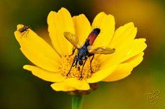On yellow flower (2): Photo by Photographer Tibi Galambos - photo.net