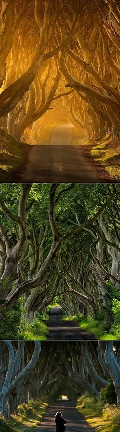 Ireland's mysterious tree tunnel called The Dark Hedges
