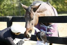 Horse Therapy |blog post