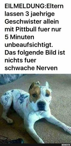 I don't speak German, but I gather some unsupervised kids took a Sharpie to this innocent dog. Enjoy RUSHWORLD boards, LULU'S FUNHOUSE, UNPREDICTABLE WOMEN HAUTE COUTURE and ART A QUIRKY SPOT TO FIND YOURSELF. Follow RUSHWORLD! We're on the hunt for everything you'll love!