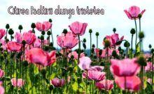 Tartă cu DOVLECEL, MORCOV și TELEMEA – absolut delicioasă – LaTAIFAS Plants, Plant, Planets