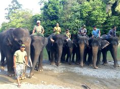 @Tangkahan, North Sumatera  lovely experience when i was there happy with the Elephants