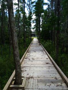 Off the beaten path - Safari Wilderness Ranch in Lakeland, FL