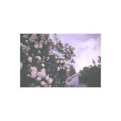 Let's get out of here, past the atmosphere. ❤ liked on Polyvore featuring pictures, backgrounds, purple, photos, flowers and fillers