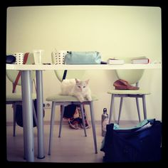 Pamuk in class!