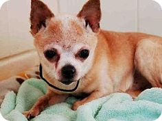 Leo is already neutered and purebred.   Act quickly to adopt *LEO. Pets at this shelter may be held for only a short time.