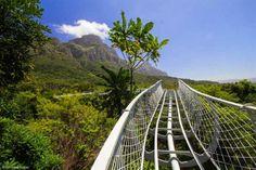New Aerial walkway at Kirstenbosch Botanical Gardens - Boomslang.