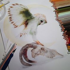 Incredible Photorealistic Snowy Owl Drawing by Karla Mialynne