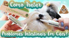 Lactobac Dog Organnact Para Tratar Problemas Intestinais Em Cães/Cachorr...