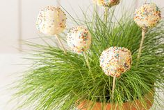 Kuchen-Lollis / Cake Pops | Kochrezept