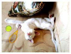 Sindy white cat